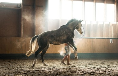 Joining Aggressive Communication with Horses