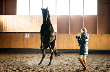 Aggression in Horses – Anna's story