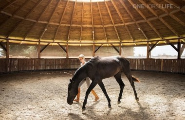 How to Plan the Development of your Horse