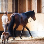 If a dressage exercise causes tension…