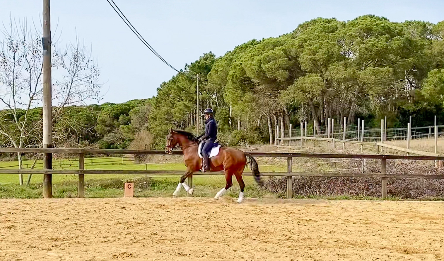 Next Level Riding Course: 19th Ride – Slowing Down the Canter